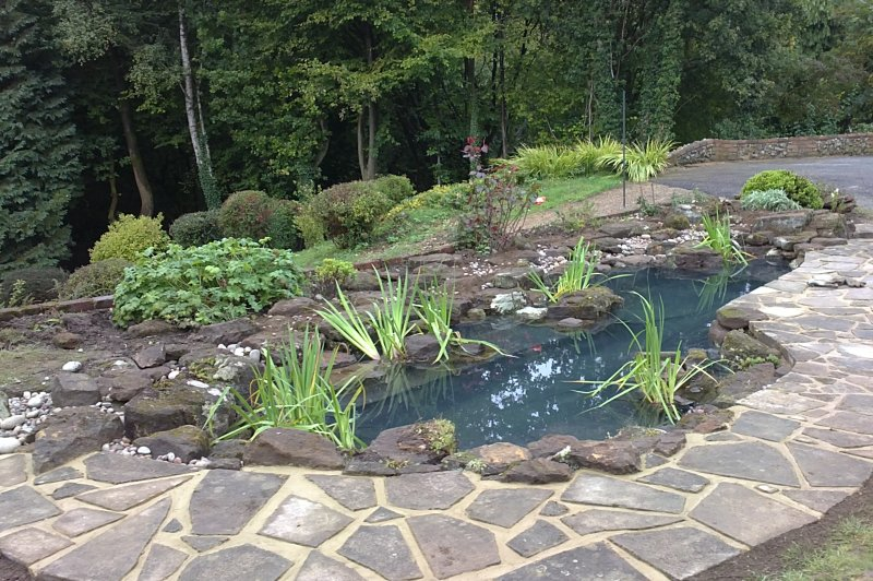 Pond re build feel good gardens for Ornamental fish pond supplies