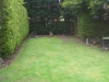 before-lawn-and-conifers